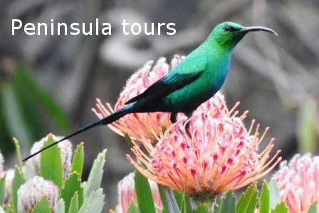 Peninsula tours